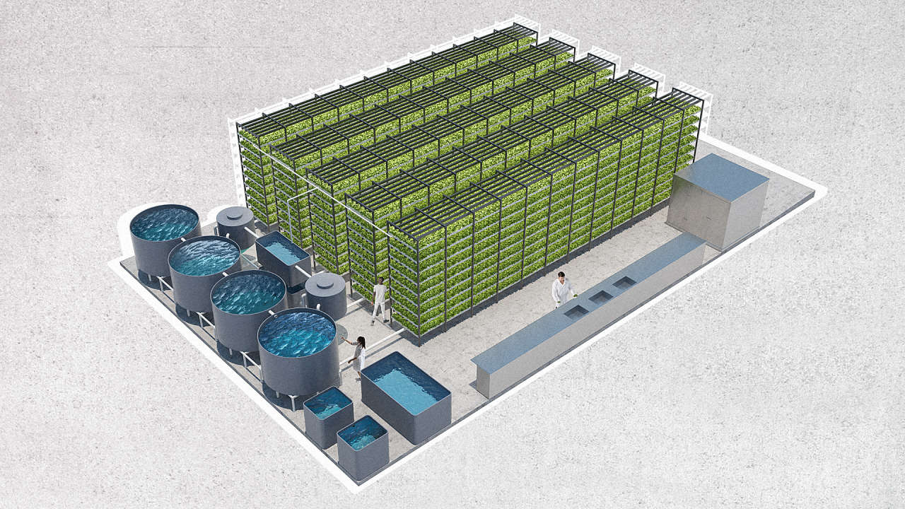 A Massive Aquaponic Lettuce And Fish Farm Will Grow In A