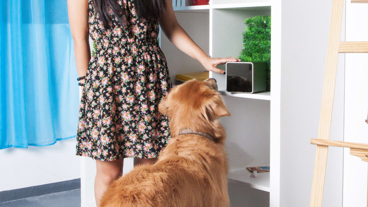5 smart gadgets that will transform the life of any pet owner