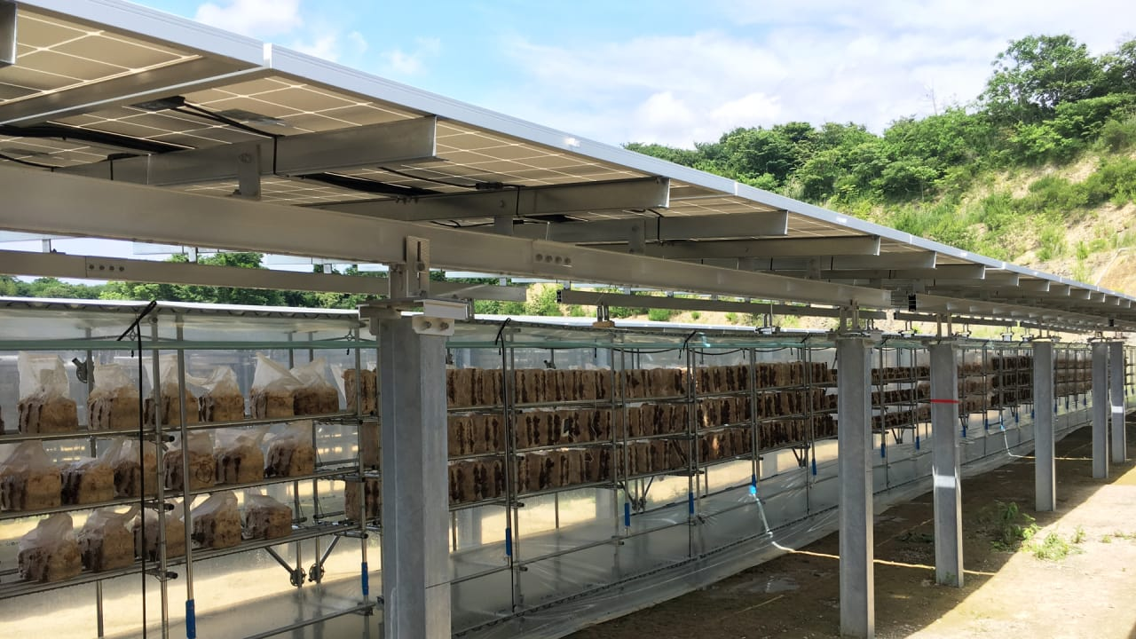 I 0 can combining agriculture with solar power help small farming businesses survive
