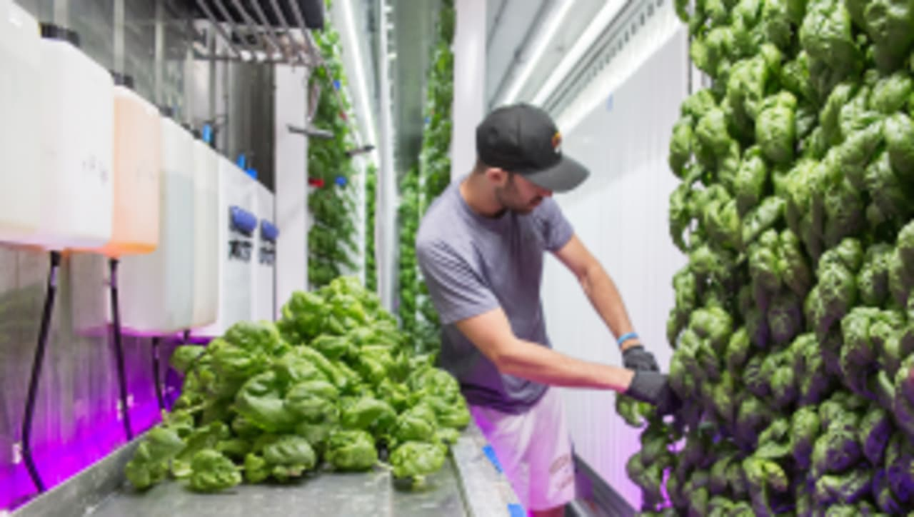 This Urban Farming Accelerator Wants To Let Thousands Of New Farms Bloom