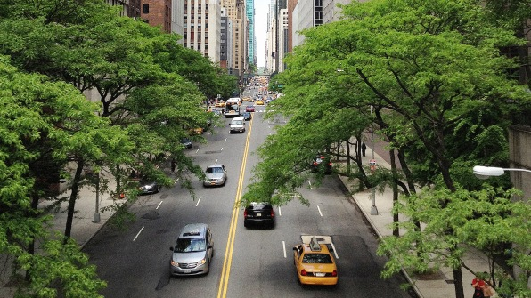 Image result for trees in city