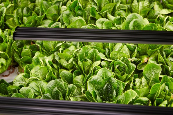 Inside The Vertical Farm Growing What It Calls The Wor