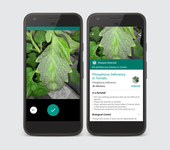 Plantix: New app aids in plant pest and disease identification