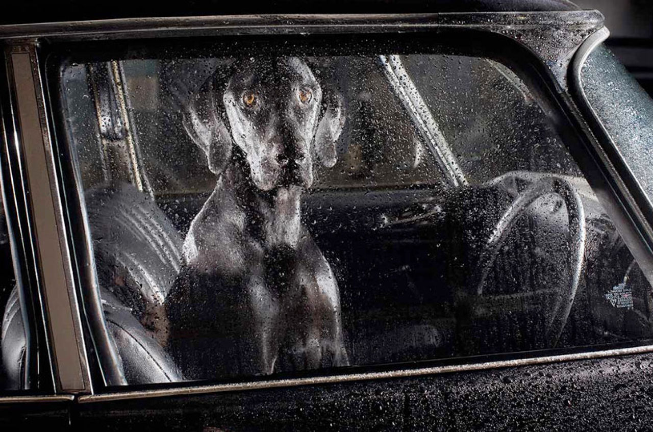 A Poignant Photo Series Captures The Silence Of Dogs In Cars