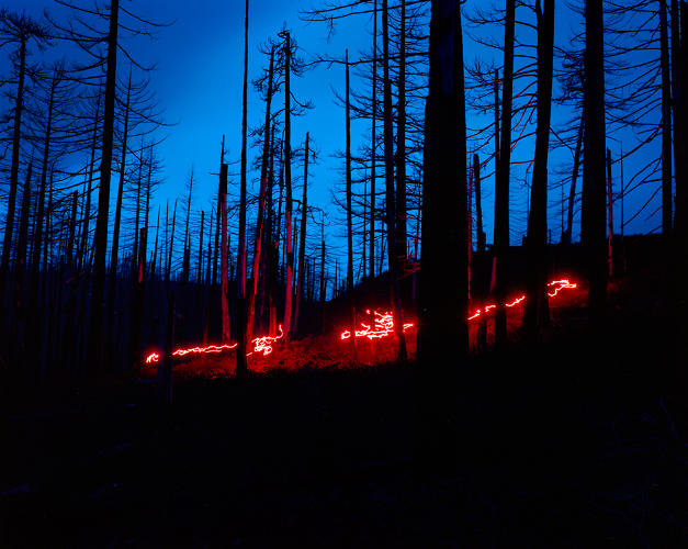 <p>A haunting image shot in Caldera Forest, a national preserve near Boulder, Colorado.</p>