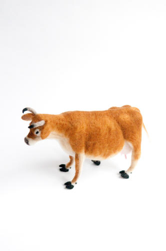 <p>A Jersey cow.</p>