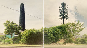 12 Beautiful Photos Of Ridiculous Cell Phone Towers Disguised As Trees