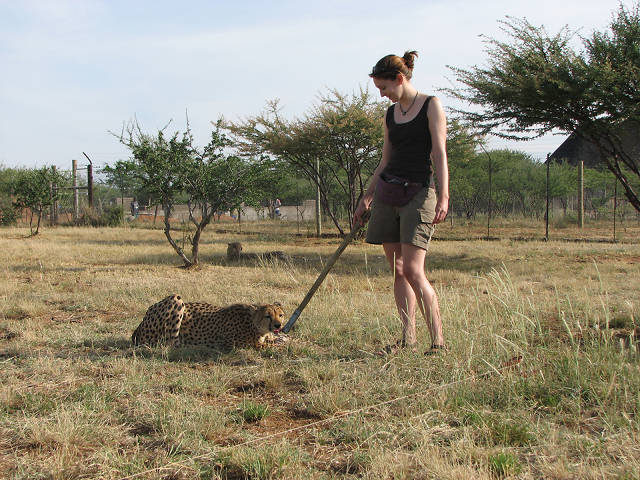 Saving Cheetahs By Making Them Friends With Farmers