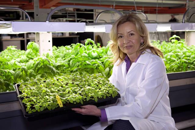 Inside A Nondescript Chicago Warehouse Hides An Enormous Farm