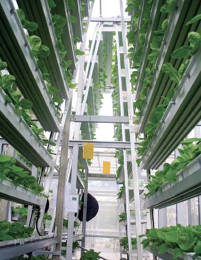 Vertical Greenhouses Bring Veggies To Urban Singapore