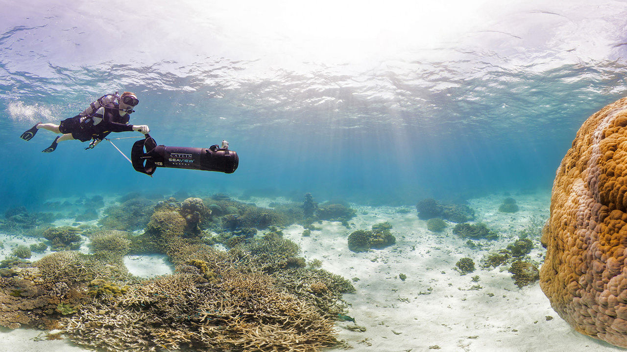 Breathtaking Panoramic Images Of Coral Reefs Reveal How They're Being Destroyed