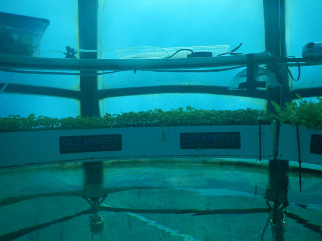 3048234-inline-s-6-these-underwater-gardens-could-feed-the-world.jpg