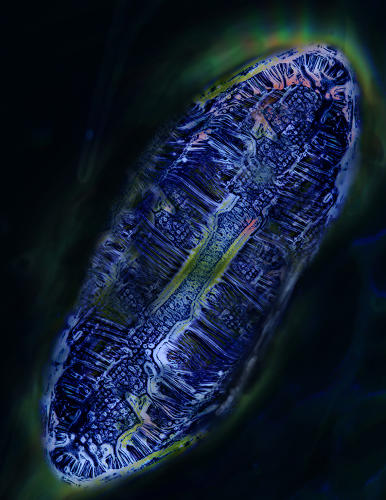 <p>Scientists at the University of South Florida are studying the microstructure of polymers in order to build biomedical devices. It looks like a little city!</p>