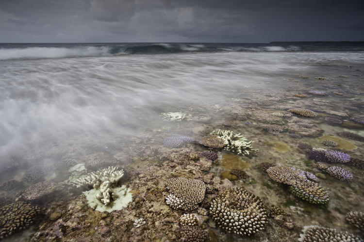 <p>The lagoon coral reef and shore at Ant Atoll, Pohnpei, Federated States of Micronesia.  Life in Micronesia has been shaped by the islands' remoteness and the rich resources of their lands and seas.</p>