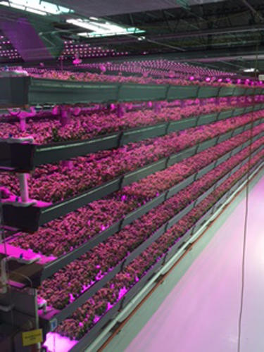 Vertical Farming - Magazine cover