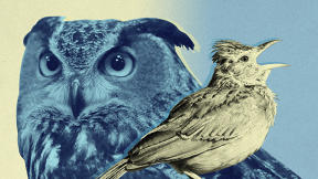 Morning People Vs. Night Owls: 9 Insights Backed By Science