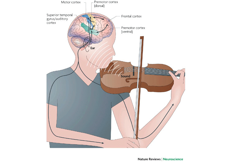 music and our brain 003