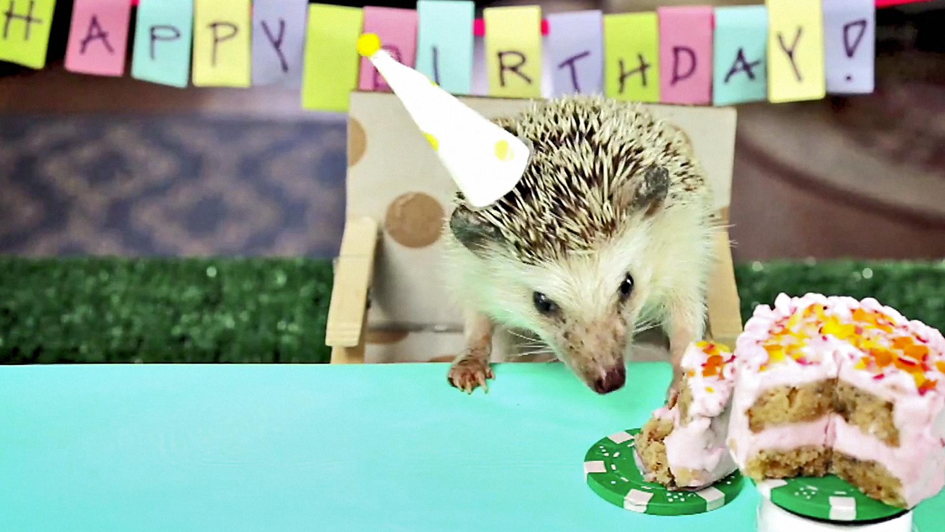 С днем рождения фото ежика, надписью рамиль истеричка